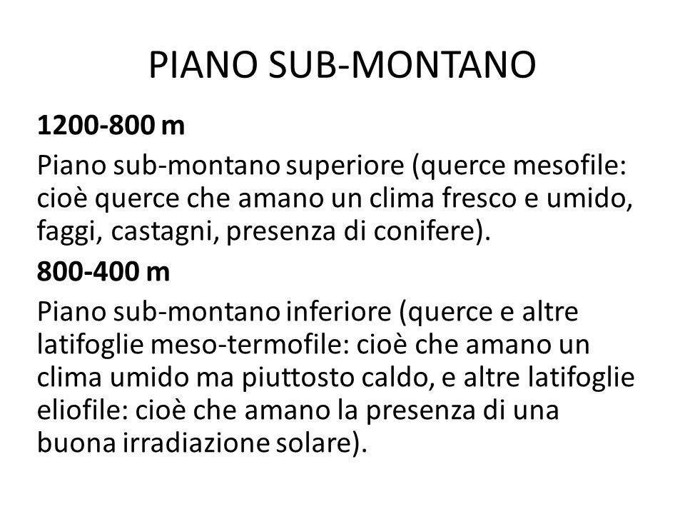 PIANO SUB-MONTANO
