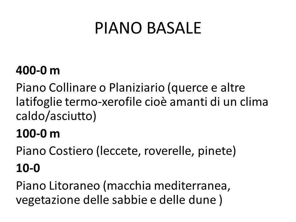 PIANO BASALE