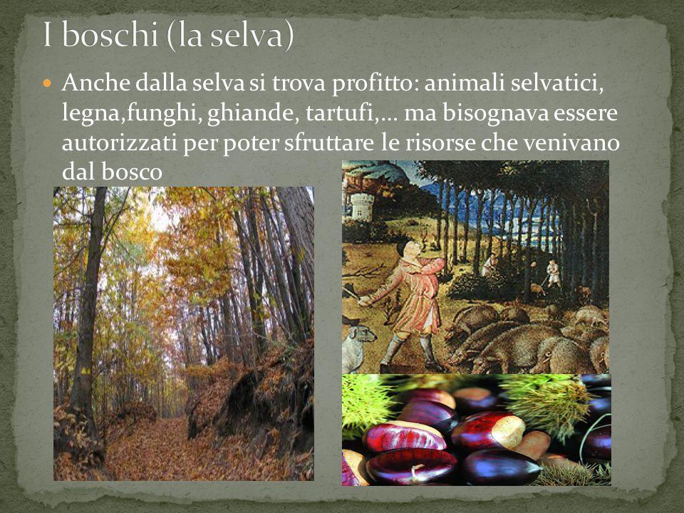 I boschi (la selva)
