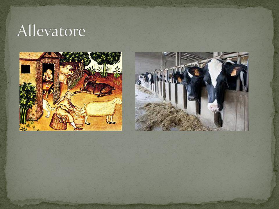 Allevatore