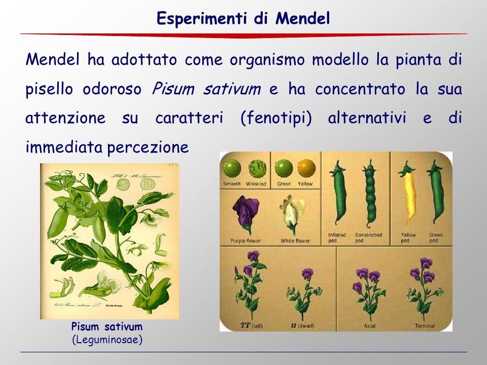 Esperimenti di Mendel