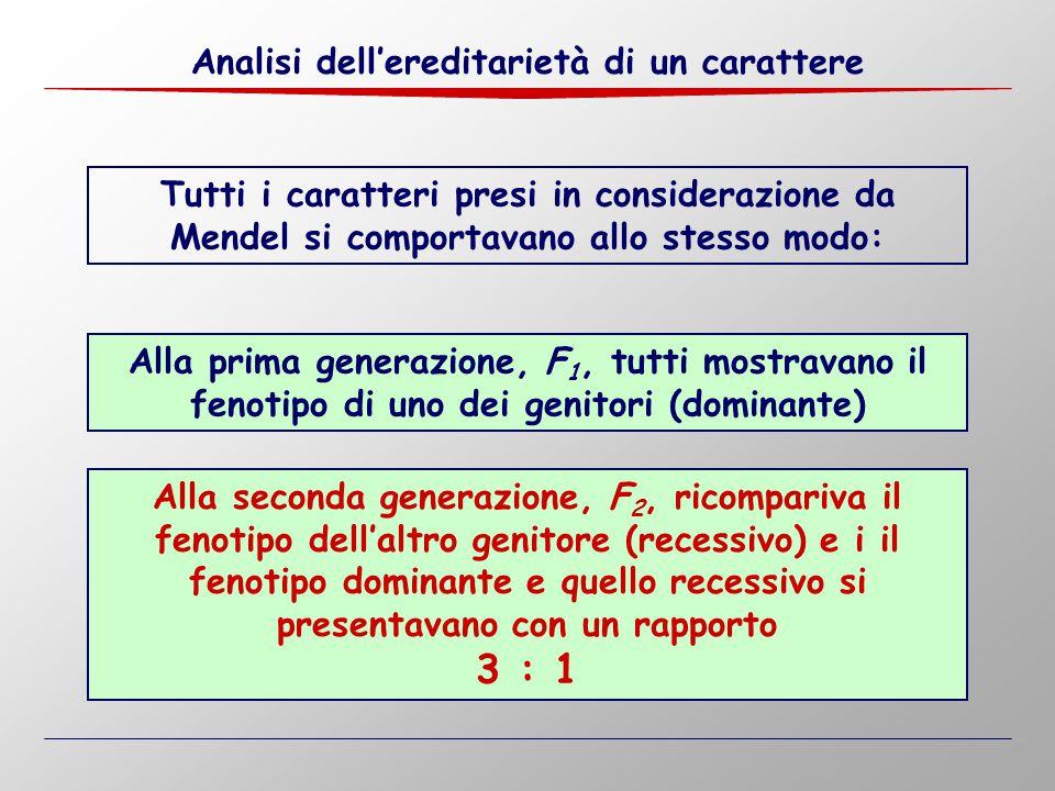 3 : 1 Analisi dell'ereditarietà di un carattere