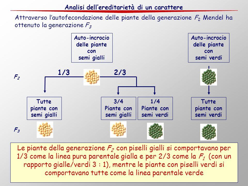 Auto-incrocio delle piante con Auto-incrocio delle piante con