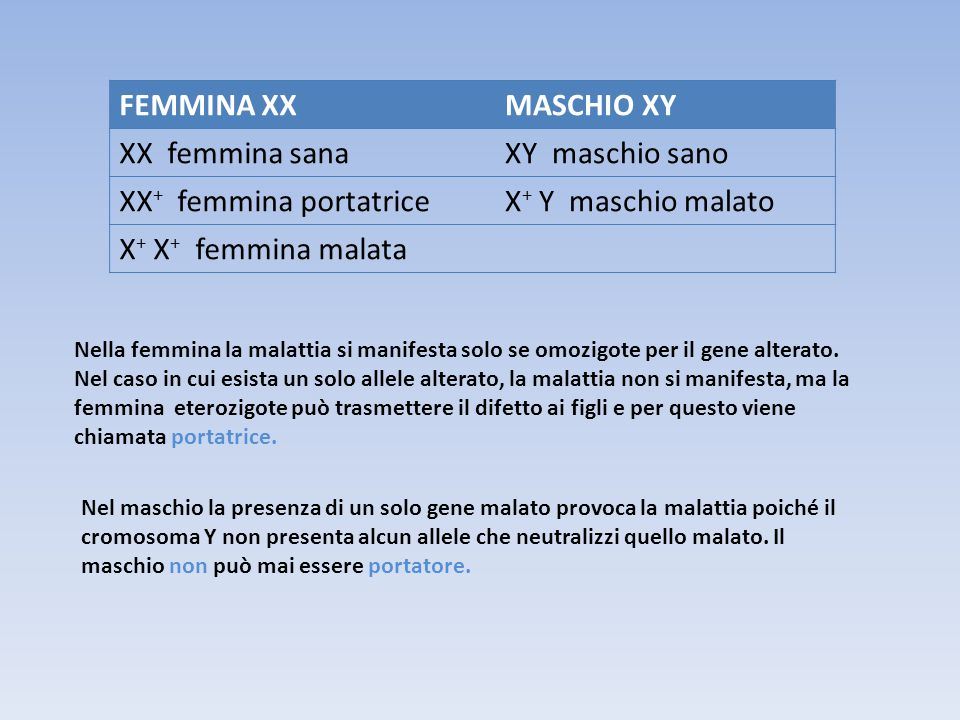 XX+ femmina portatrice X+ Y maschio malato X+ X+ femmina malata
