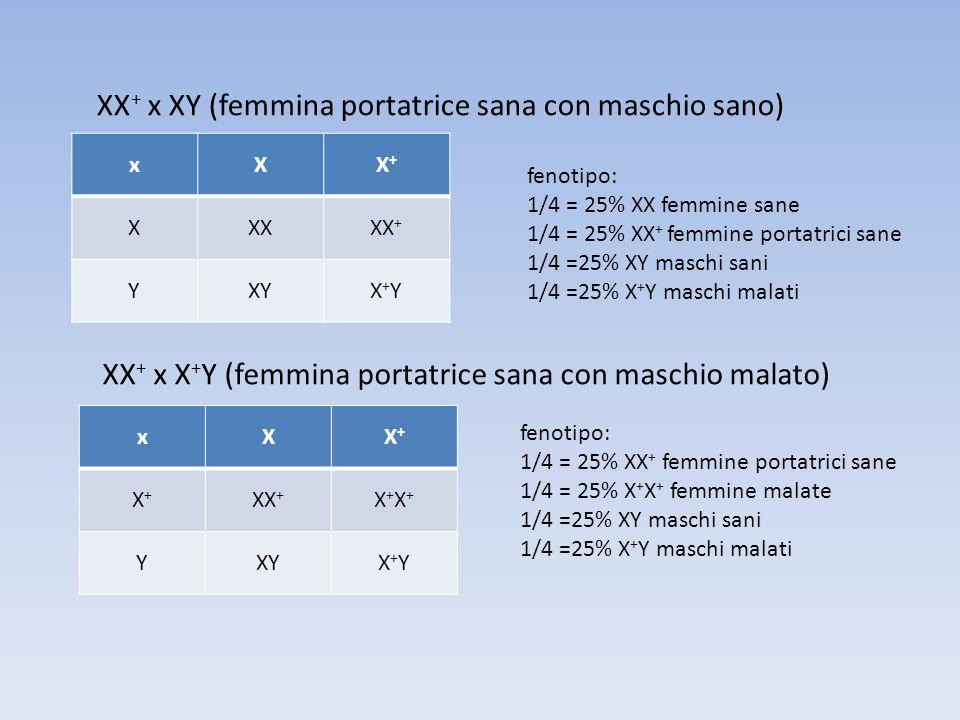 XX+ x XY (femmina portatrice sana con maschio sano)