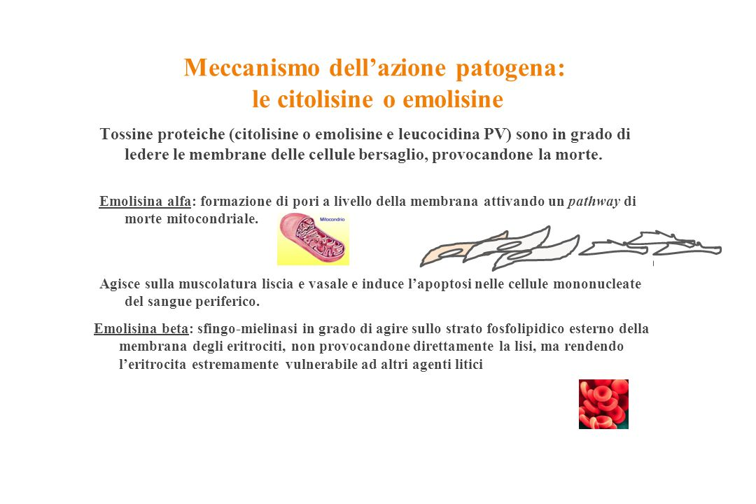 Meccanismo dell'azione patogena: le citolisine o emolisine