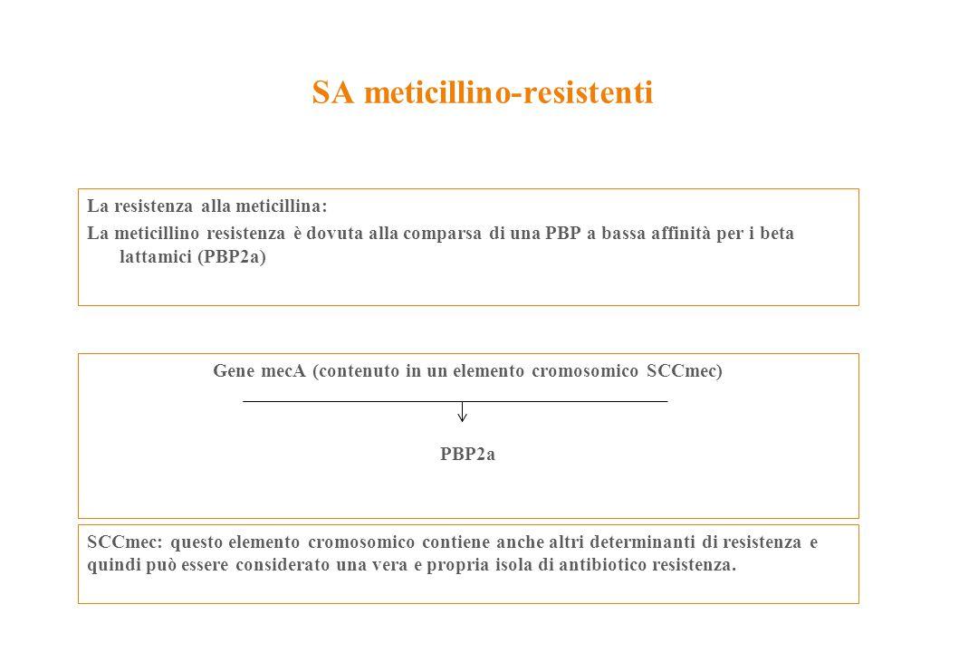 SA meticillino-resistenti