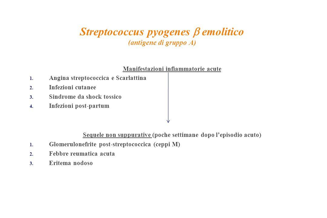 Streptococcus pyogenes b emolitico (antigene di gruppo A)