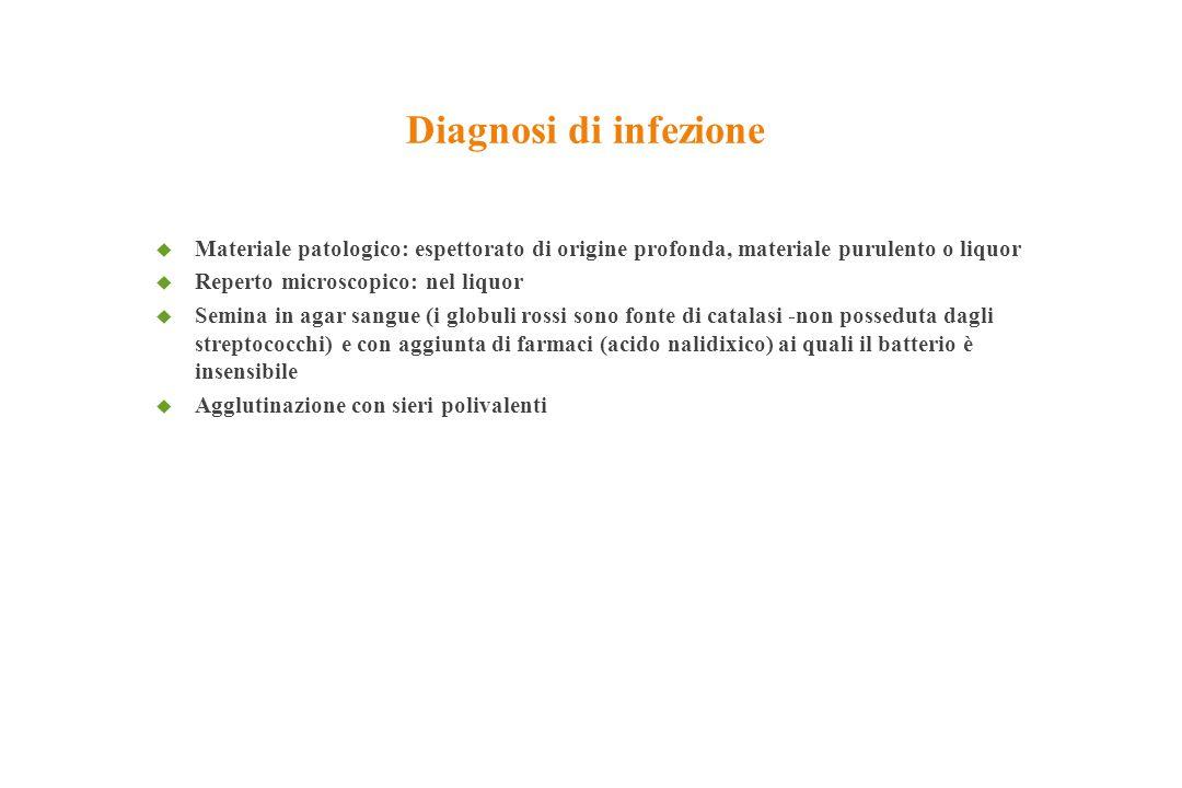 Diagnosi di infezione Materiale patologico: espettorato di origine profonda, materiale purulento o liquor.