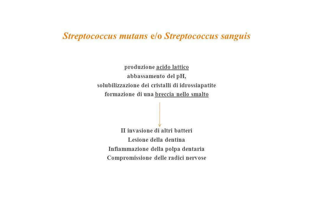 Streptococcus mutans e/o Streptococcus sanguis