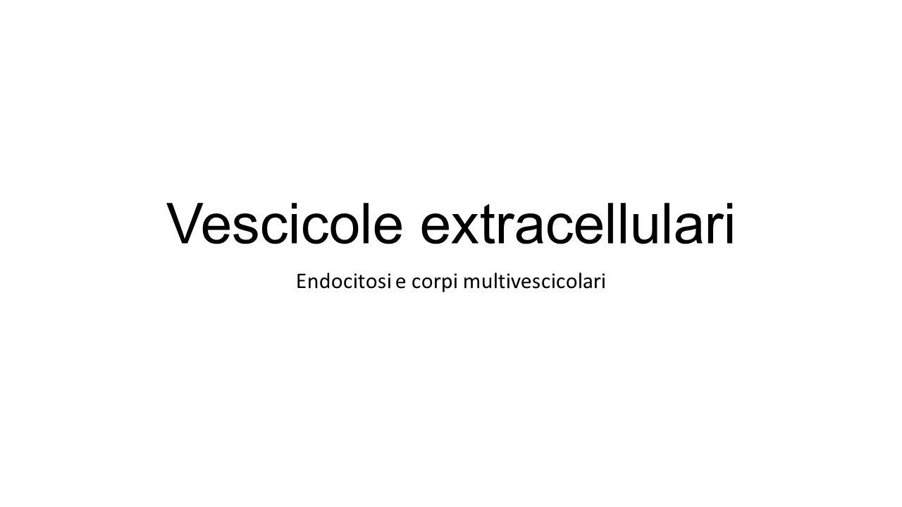Vescicole extracellulari
