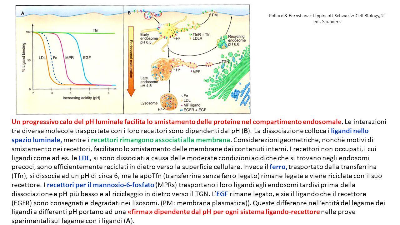 Pollard & Earnshaw + Lippincott-Schwartz: Cell Biology, 2° ed