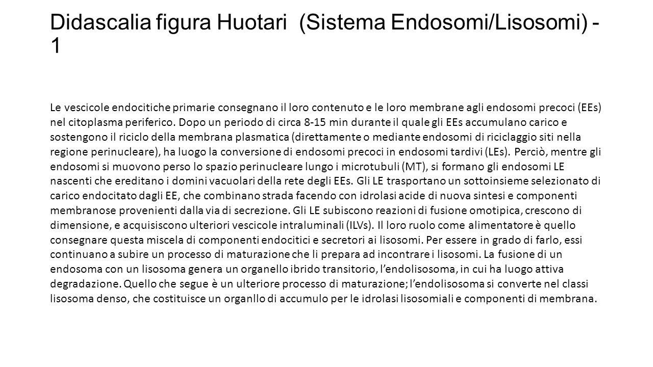 Didascalia figura Huotari (Sistema Endosomi/Lisosomi) - 1