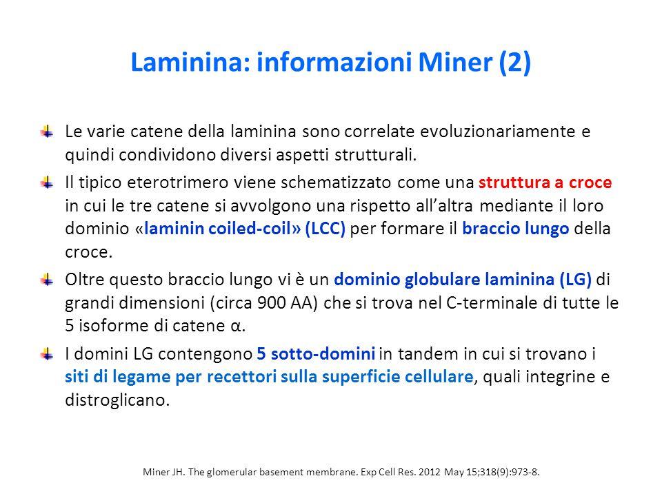 Laminina: informazioni Miner (2)