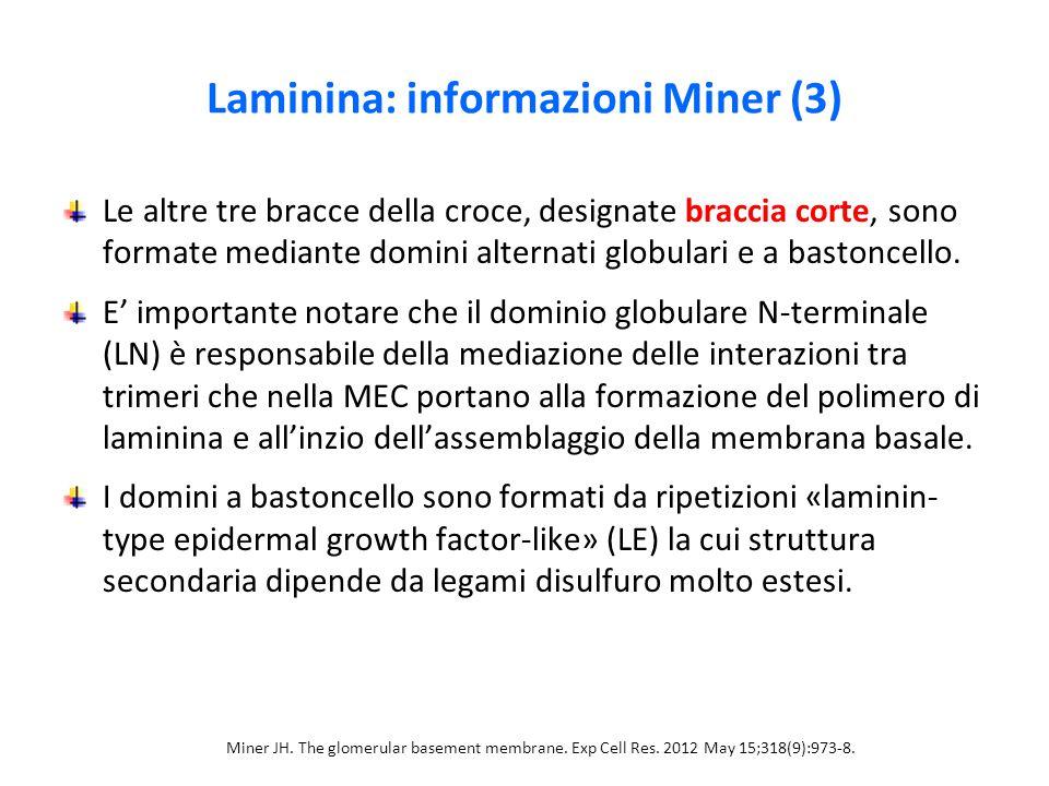 Laminina: informazioni Miner (3)
