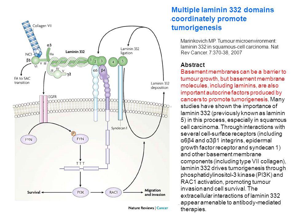 Multiple laminin 332 domains coordinately promote tumorigenesis