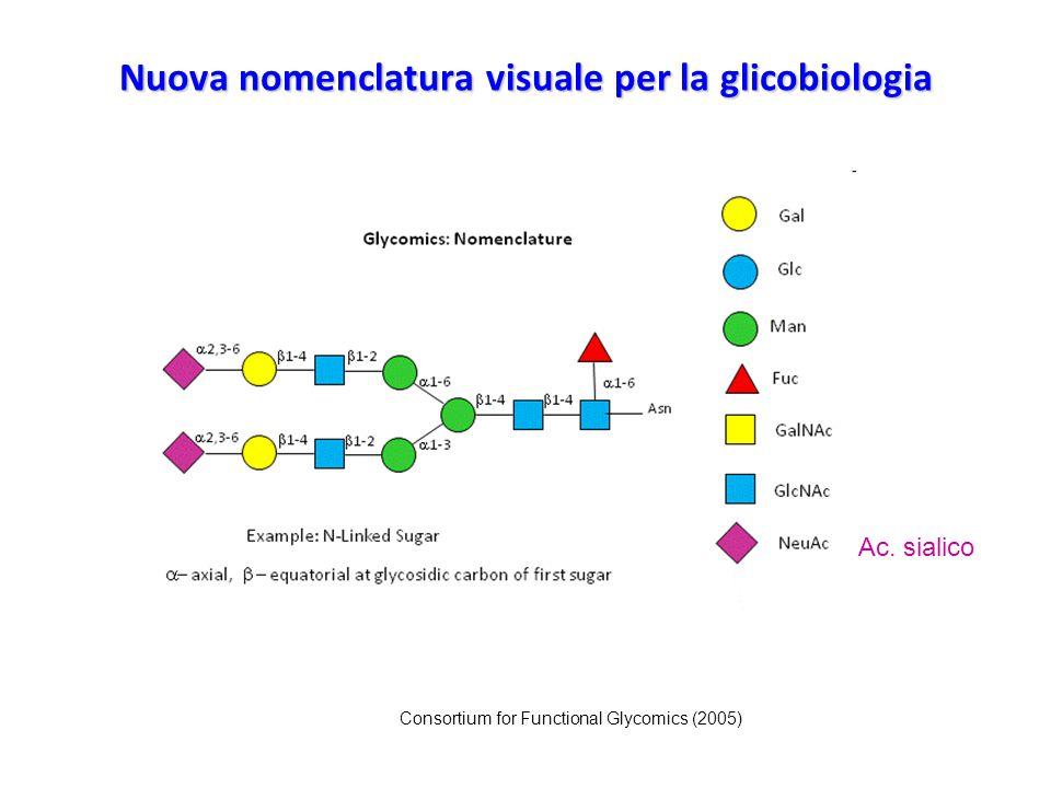 Nuova nomenclatura visuale per la glicobiologia