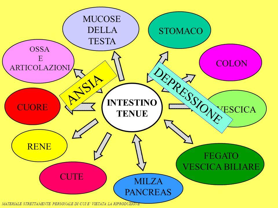 ANSIA DEPRESSIONE MUCOSE DELLA TESTA STOMACO COLON INTESTINO TENUE