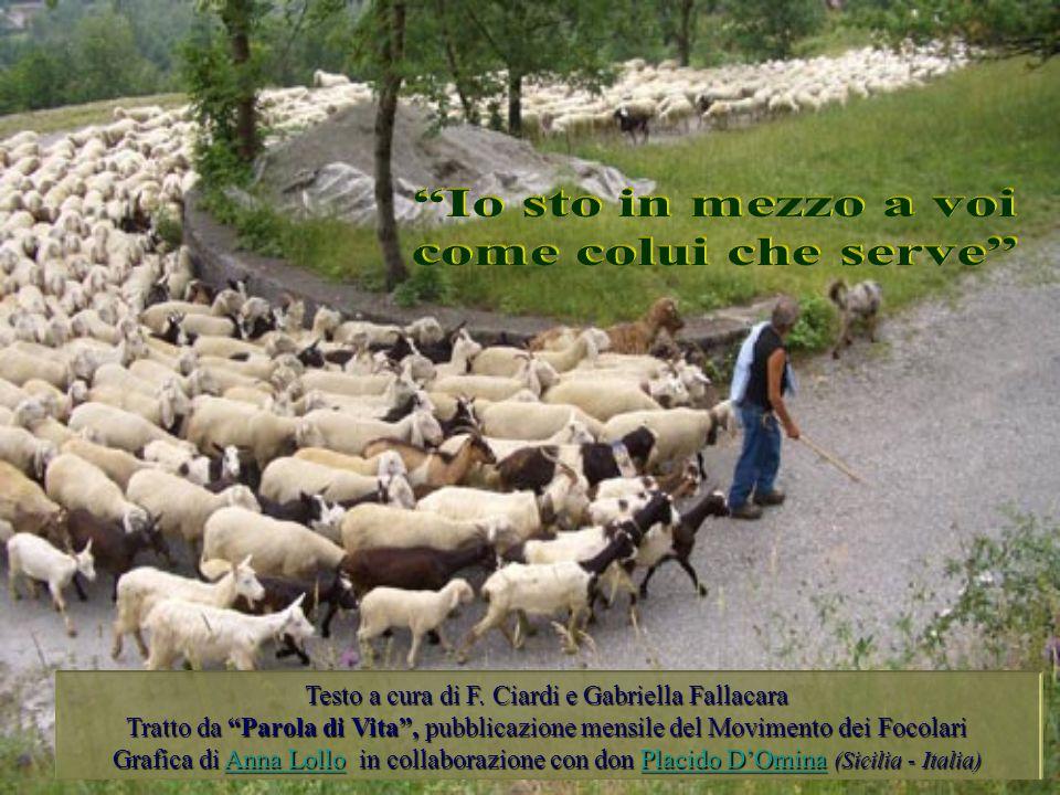 Testo a cura di F. Ciardi e Gabriella Fallacara