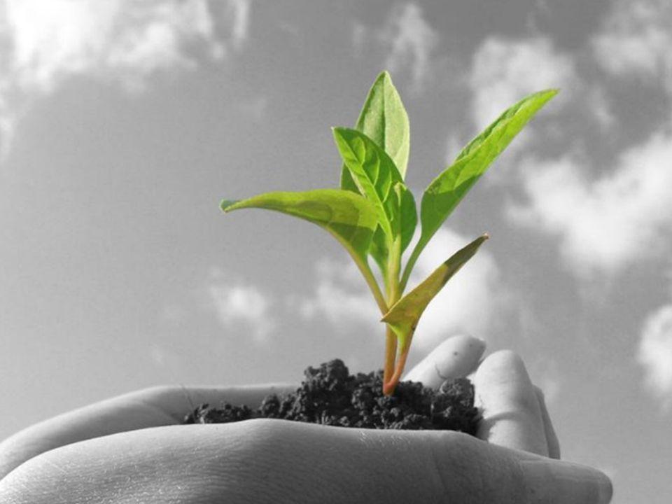 Integrazione ed ecosistema