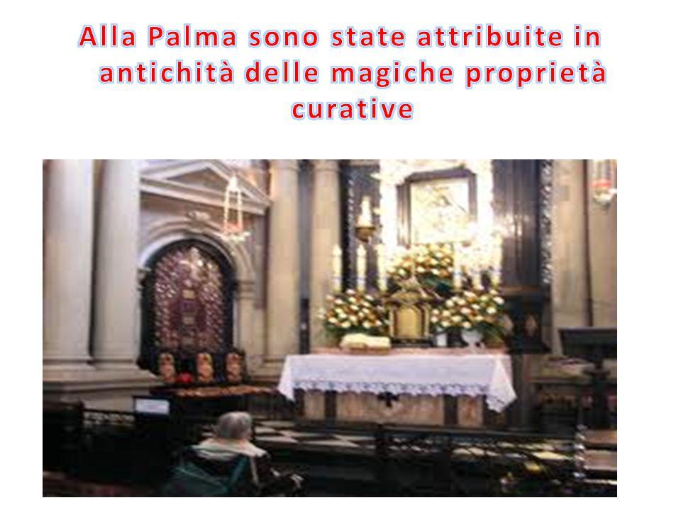 Alla Palma sono state attribuite in antichità delle magiche proprietà curative