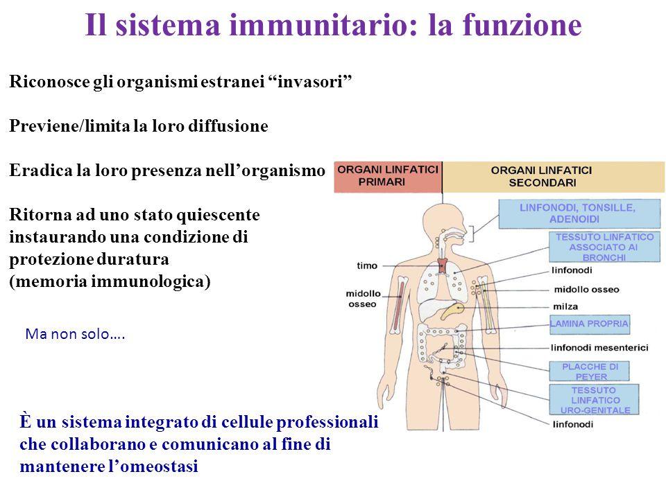 Il sistema immunitario: la funzione