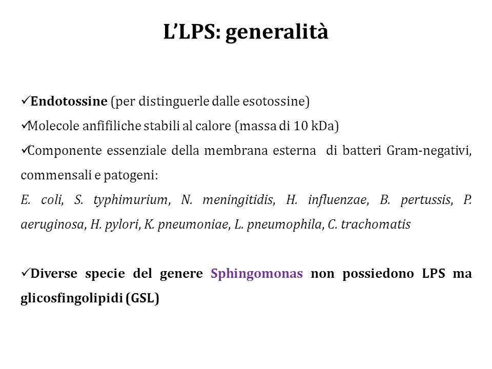L'LPS: generalità Endotossine (per distinguerle dalle esotossine)