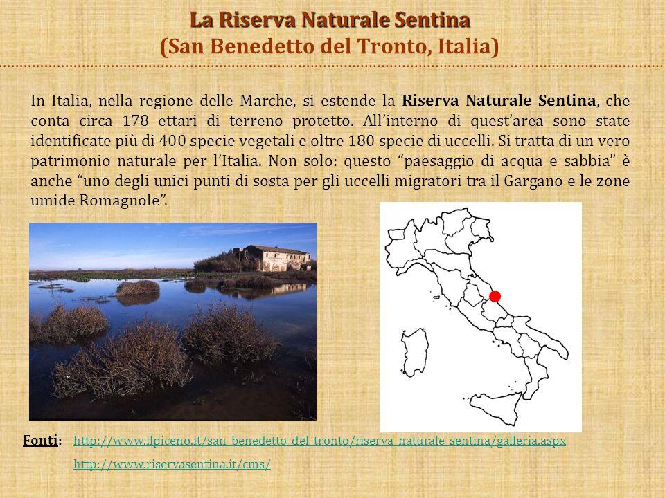 La Riserva Naturale Sentina (San Benedetto del Tronto, Italia)