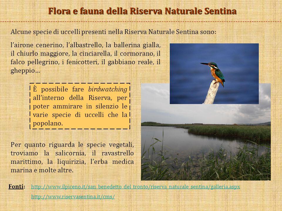Flora e fauna della Riserva Naturale Sentina