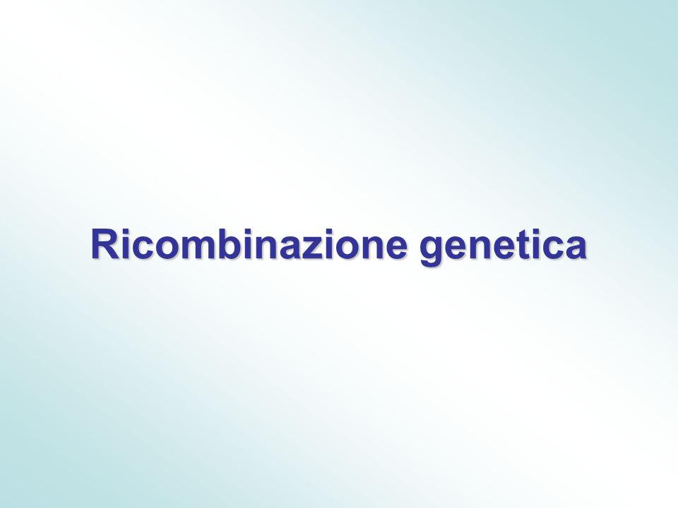 Ricombinazione genetica
