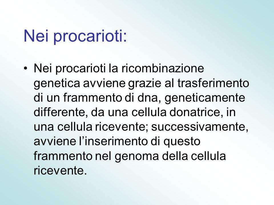 Nei procarioti: