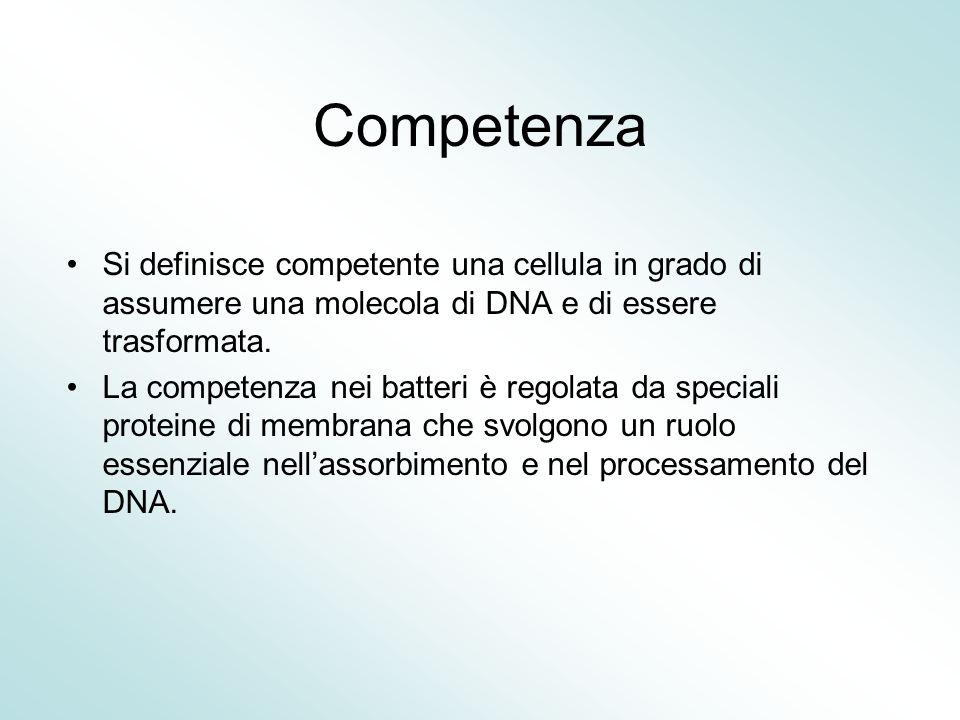 Competenza Si definisce competente una cellula in grado di assumere una molecola di DNA e di essere trasformata.