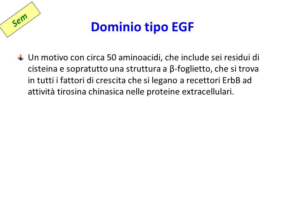 Dominio tipo EGF Sem.