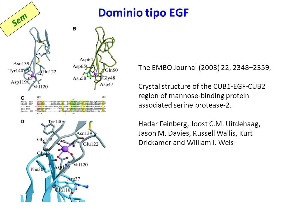 Dominio tipo EGF Sem The EMBO Journal (2003) 22, 2348–2359,