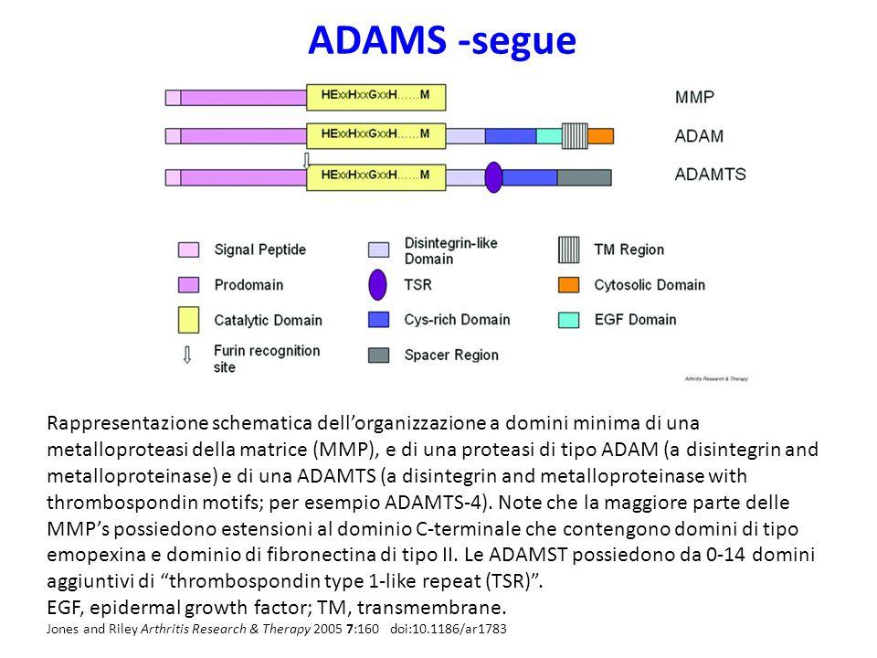 ADAMS -segue