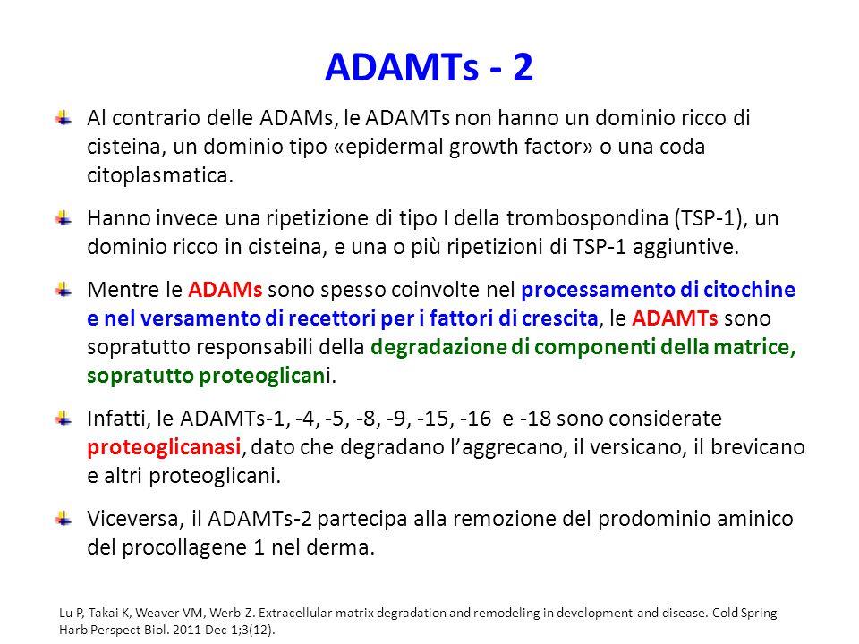 ADAMTs - 2
