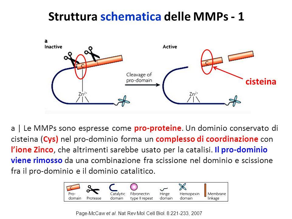 Struttura schematica delle MMPs - 1