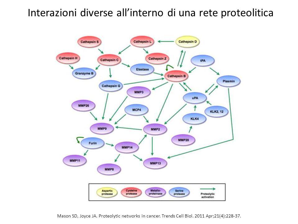 Interazioni diverse all'interno di una rete proteolitica