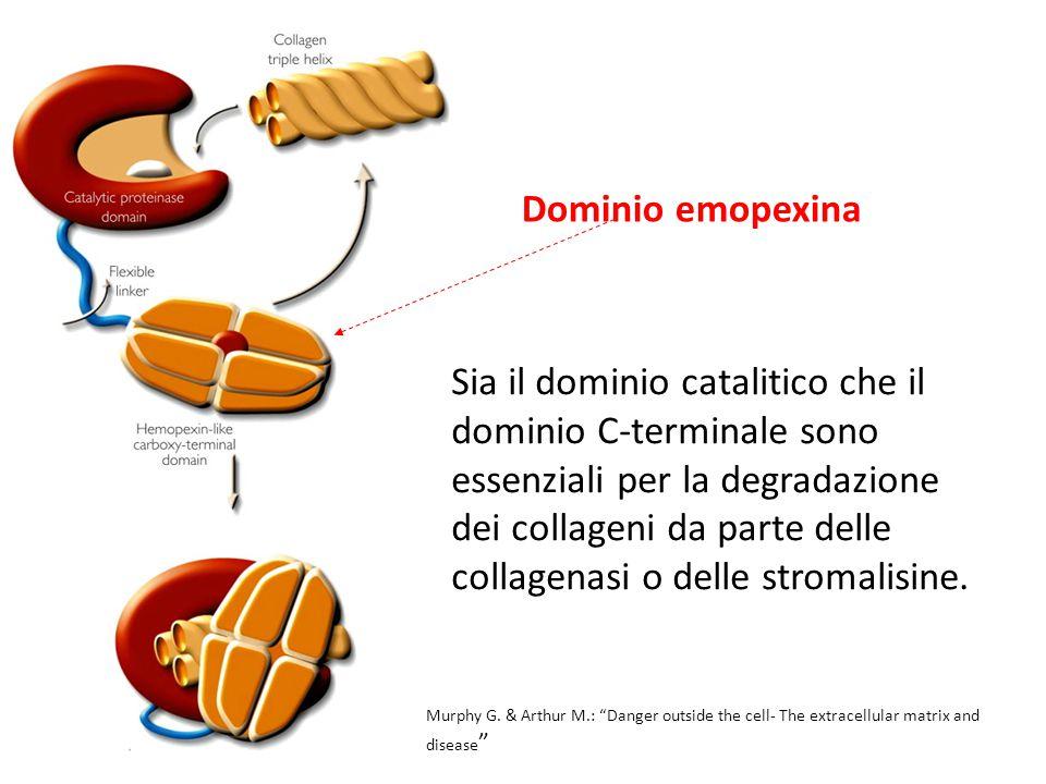 Dominio emopexina