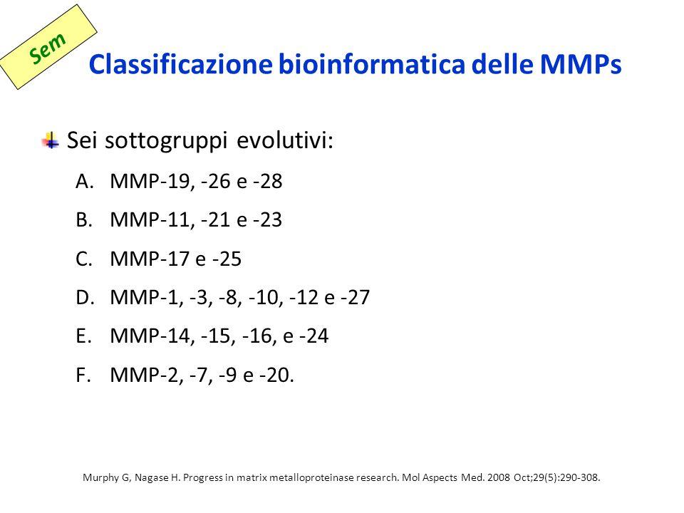 Classificazione bioinformatica delle MMPs