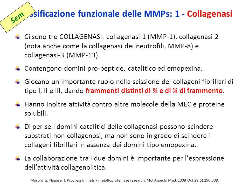 Classificazione funzionale delle MMPs: 1 - Collagenasi