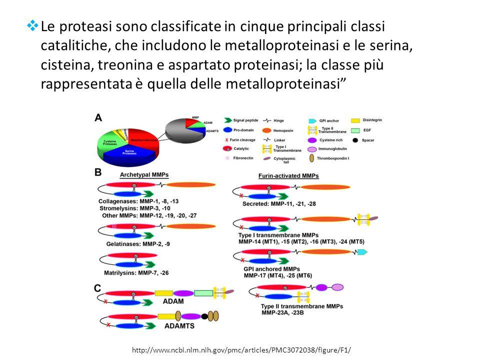 Le proteasi sono classificate in cinque principali classi catalitiche, che includono le metalloproteinasi e le serina, cisteina, treonina e aspartato proteinasi; la classe più rappresentata è quella delle metalloproteinasi