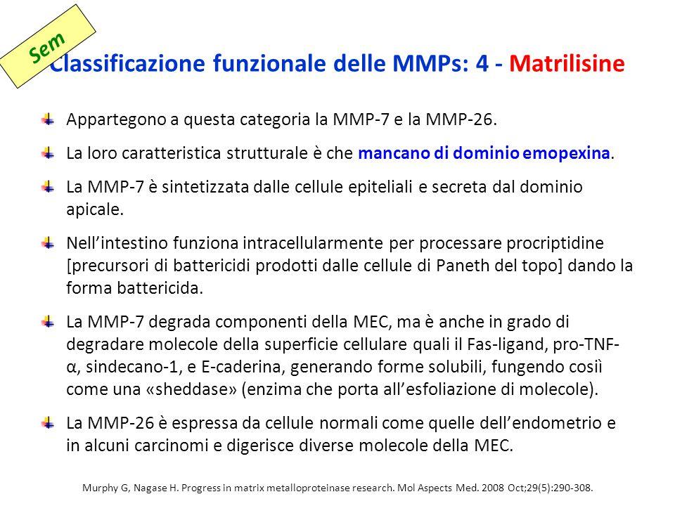 Classificazione funzionale delle MMPs: 4 - Matrilisine