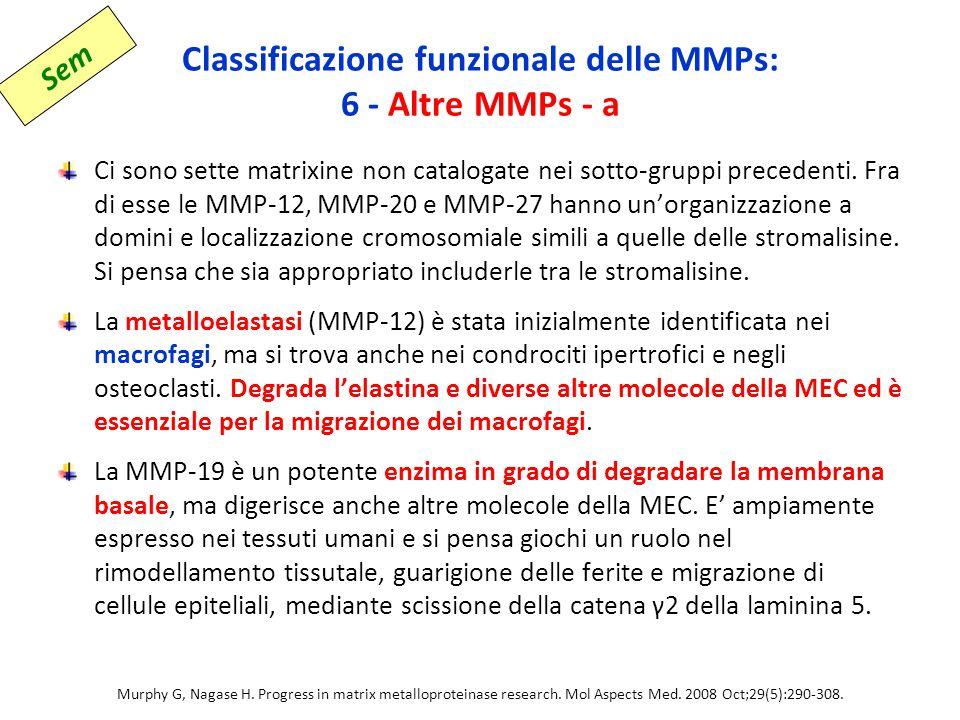 Classificazione funzionale delle MMPs: 6 - Altre MMPs - a