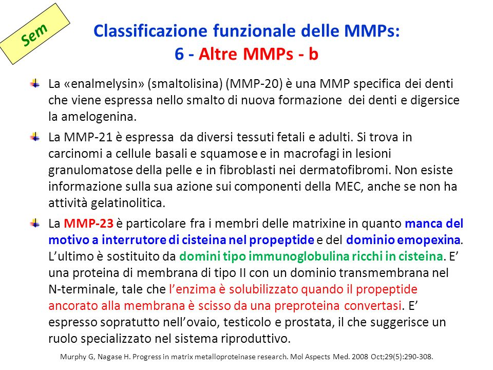 Classificazione funzionale delle MMPs: 6 - Altre MMPs - b