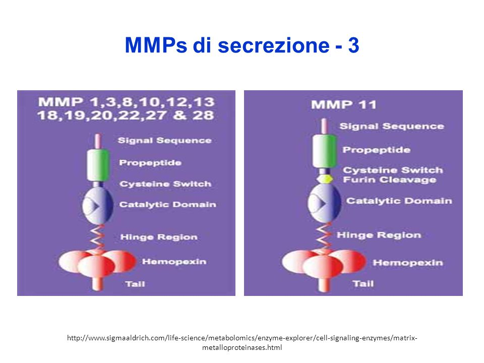 MMPs di secrezione - 3 http://www.sigmaaldrich.com/life-science/metabolomics/enzyme-explorer/cell-signaling-enzymes/matrix-metalloproteinases.html.