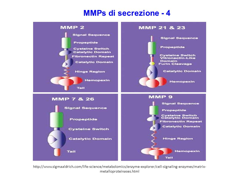 MMPs di secrezione - 4 http://www.sigmaaldrich.com/life-science/metabolomics/enzyme-explorer/cell-signaling-enzymes/matrix-metalloproteinases.html.