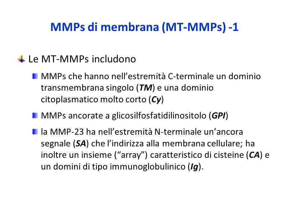 MMPs di membrana (MT-MMPs) -1