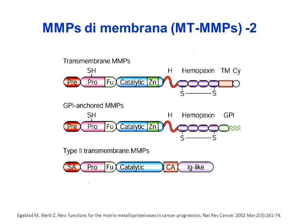 MMPs di membrana (MT-MMPs) -2