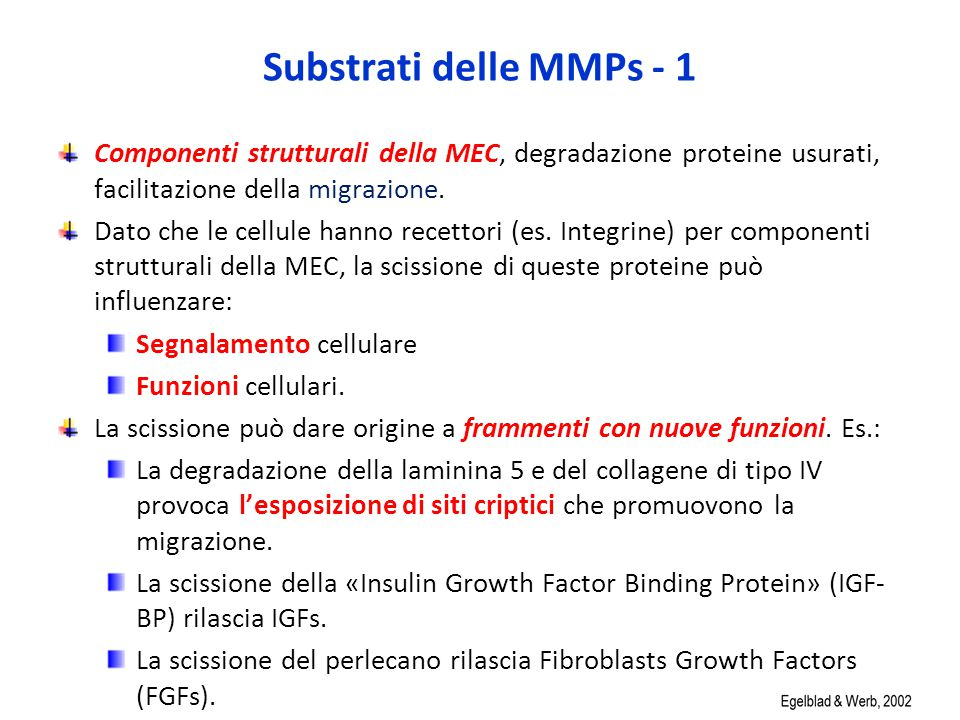 Substrati delle MMPs - 1 Componenti strutturali della MEC, degradazione proteine usurati, facilitazione della migrazione.
